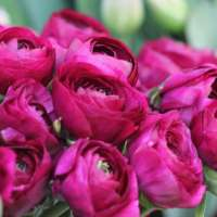 Az ötvenedik nap – pünkösd ünnepe